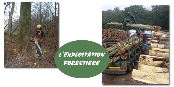 exploitation-forestiere